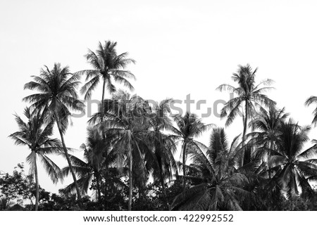 coconut trees with black and white tone - stock photo