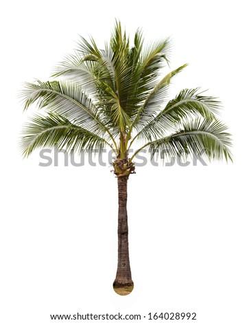 Coconut white background - stock photo
