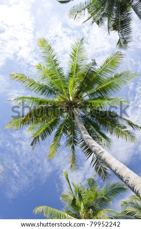 Coconut with blue sky - stock photo