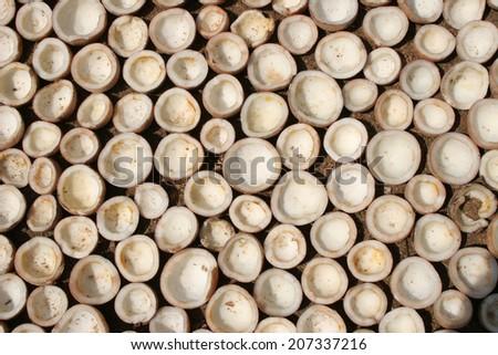 Coconuts - stock photo
