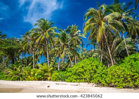 Coconuts palm tree in tropical island beach - Koh Kood, Trat Thailand - stock photo