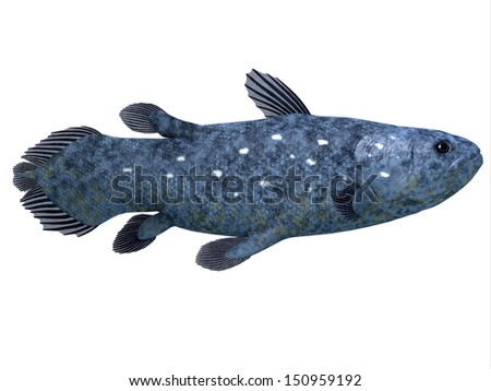 Coelacanth Fish on White - The Coelacanth fish was believed to be extinct but were discovered in 1938 to still be living. - stock photo