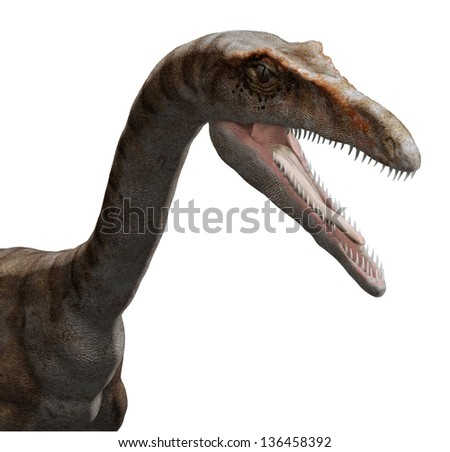 Coelophysis - stock photo