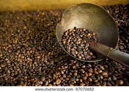 Coffee bean background in bali - stock photo