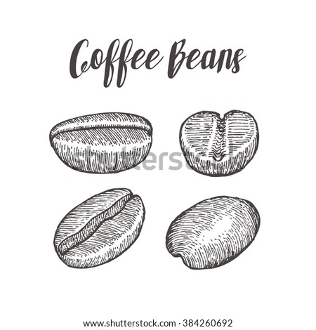 Coffee bean, seed, natural organic caffeine fruit. Hand drawn illustration on white background. - stock photo