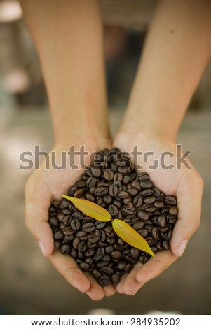 Coffee beans and coffee plant  in hands  - stock photo