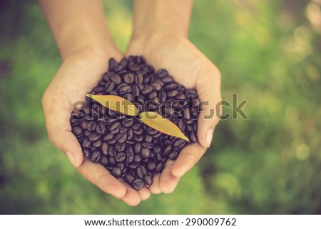 Coffee beans and coffee plant  in hands vintage color - stock photo