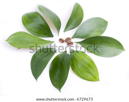 coffee beans and leaves - stock photo