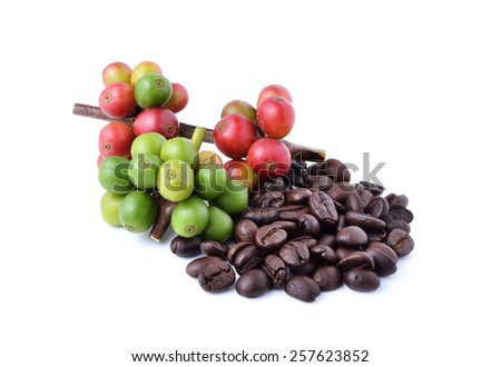 coffee beans and ripe coffee isolated on white background. - stock photo