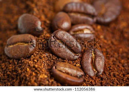 coffee beans are in the ground coffee closeup