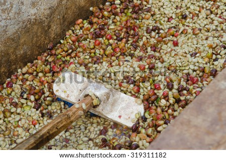 Coffee beans,In the ferment-and-wash method of wet processing  - stock photo