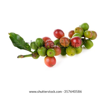 Coffee cherry isolate on white background - stock photo