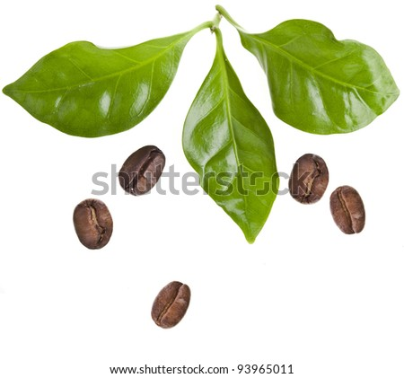 coffee grains and leaves of coffee trees isolated on white