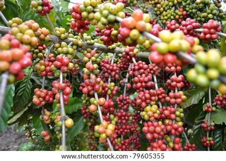 Coffee - multiples - stock photo