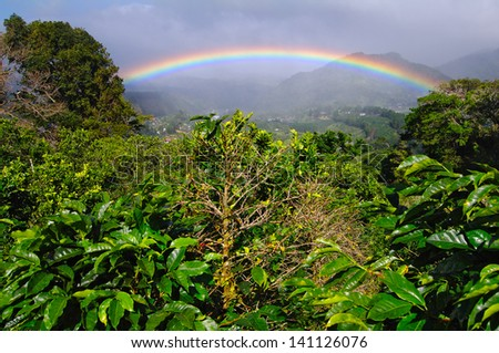 Coffee Plantation and Rainbow in Boquete. Rainbows and coffee plants are common in Boquete, Panama (Central America). - stock photo