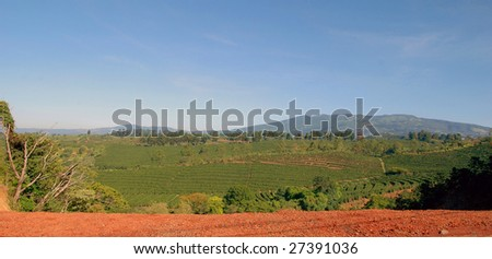 Coffee plantation in Costa Rica with mountains in background - stock photo