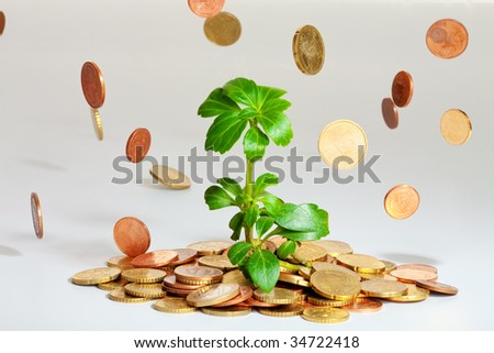 Coins are falling on a heap of money with a growing plant - stock photo