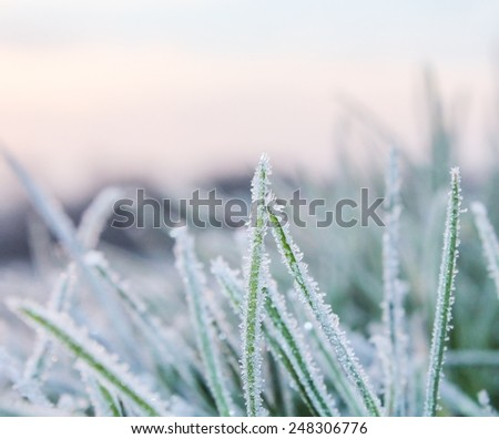 Cold Hard Morning Frost on Blades of Grass - stock photo