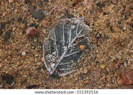 Cold leaf on the sand