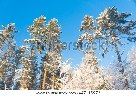 Cold Sunshine Icy Forest  - stock photo