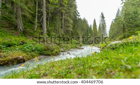 Cold water creek in evergreen pine forest in the austrian alps - stock photo