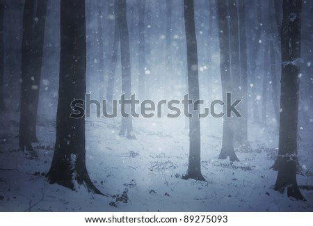cold winter in a forest with snow falling on the ground - stock photo