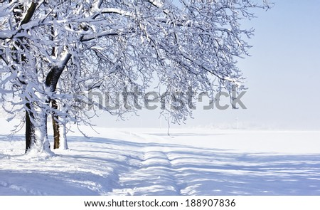 Cold winter morning landscape with fresh snow. - stock photo