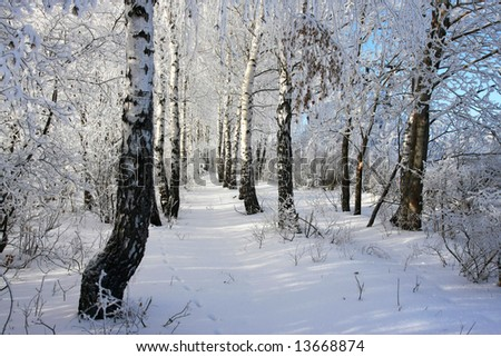 cold winter snow forest tree frozen - stock photo
