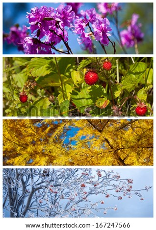 Collage. Bright floral backgrounds. Four seasons. Calendar   - stock photo