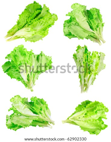 Collage (collection ) of Leaf of lettuce on white background. Isolated over white - stock photo