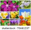 Collage containing 7 very colorful images of spring flowers - stock photo