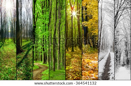 collage forest season  backgrounds. Winter, Spring, Summer, Autumn. Collection - stock photo