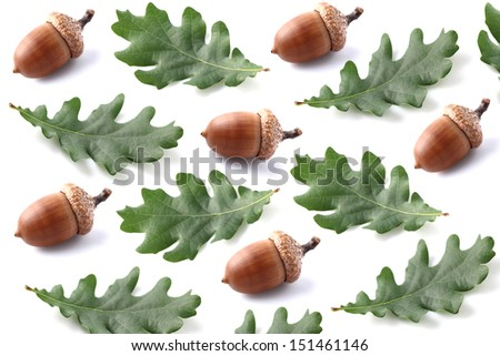 Collage from acorns with leaves - stock photo
