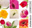 Collage from flowers by day of mother - stock photo