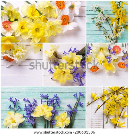 Collage from photos  from colorful yellow, orange and blue spring flowers  on white  painted wooden planks. Selective focus.  Place for text.  - stock photo