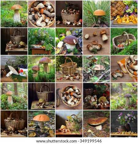Collage from pictures with mushrooms: mushrooms in the wood, still lifes with mushrooms, the top view.