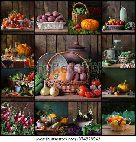 Collage from still lifes with vegetables: tomato, potatoes, cucumber, pumpkin, carrots and others. A crop from a kitchen garden. - stock photo