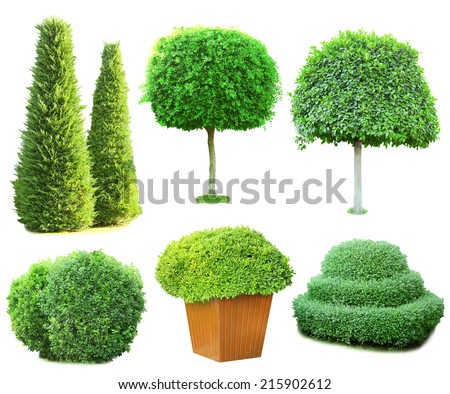 Collage green trees and bushes isolated on white - stock photo
