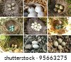 Collage - nests of birds in nature - stock photo