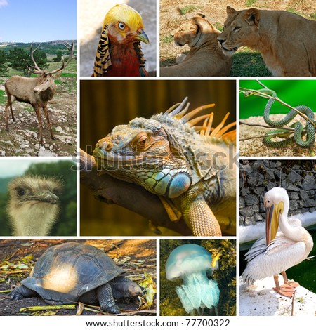 Collage of animals images - nature background (my photos) - stock photo