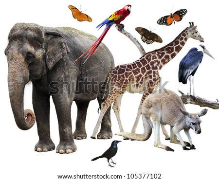 Collage Of Animals Images On White Background