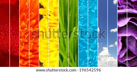 Collage of beautiful flowers, grass, sky and water - stock photo
