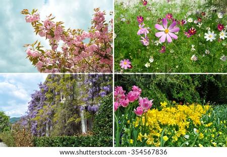 Collage of beautiful garden summer flowers. Sakura, wisteria, tulips and cosmos (Cosmos Bipinnatus) flowers - stock photo