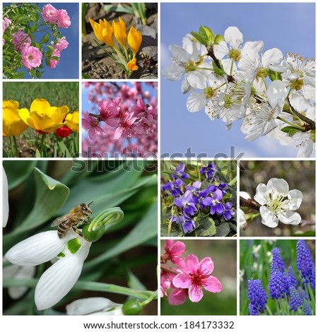 Collage of beautiful spring flowers background