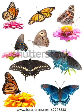 Collage of bright, colorful butterflies on white - stock photo