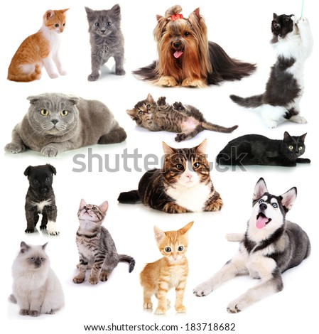 Collage of cats and dogs isolated on white - stock photo