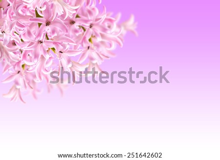 Collage of colors pink hyacinth on a purple background - stock photo