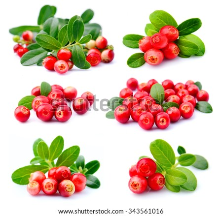 Collage of cranberries on a white background close up - stock photo