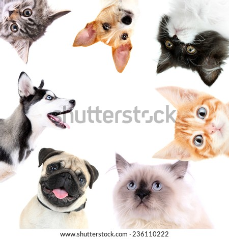 Collage of cute dogs and cats isolated on white - stock photo