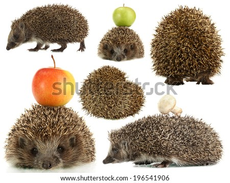 Collage of cute hedgehog isolated on white - stock photo